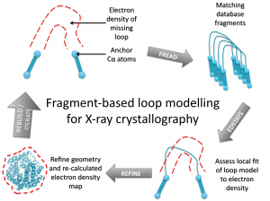Fragment-based loop modelling pipeline for X-ray crystallography