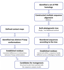 Figure 1. Workflow of the sequence and structure analysis of PIM kinases